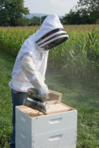 Beekeeping Smoker